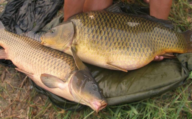 На Дону за год производство рыбы увеличилось почти вдвое
